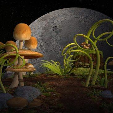 Čudesni svet gljiva