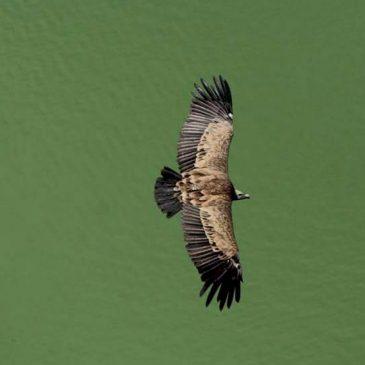 Ugrožene životinje Srbije – ptice