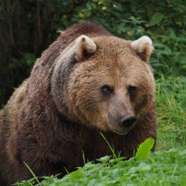 Ugrožene životinje Srbije – sisari